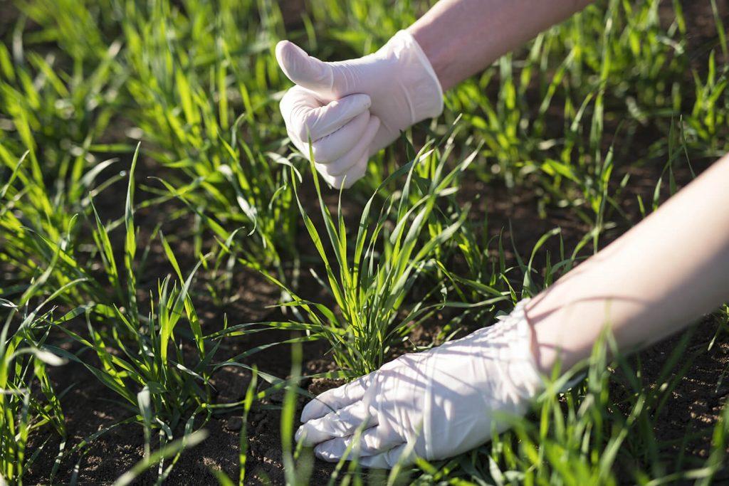 beneficios-de-los-fertilizantes