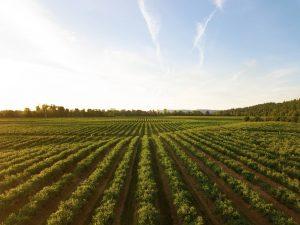 Aplicacion de fertilizante beneficios