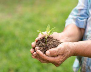 Beneficios de los fertilizantes